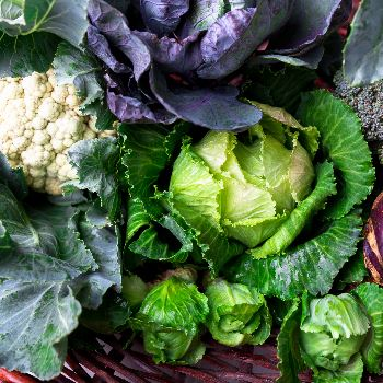 Learn about growing with cruciferous vegetables on Aug. 5
