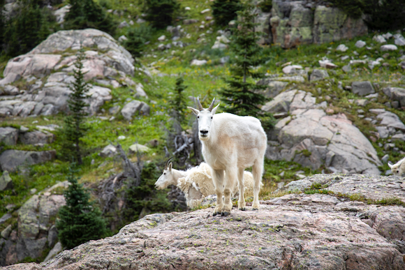 Photographer Lena Kalotihos encounters wild animals on hike to Booth Lake