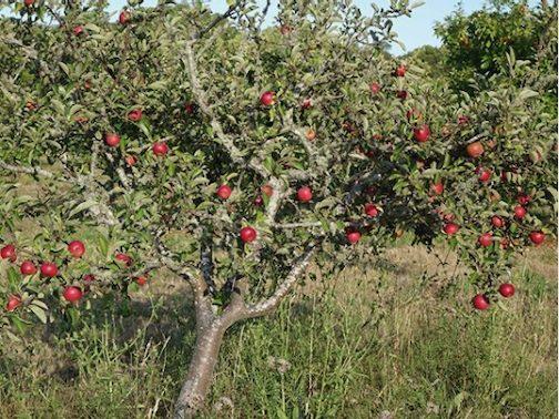 Fall season brings Orchard Days to Fill
