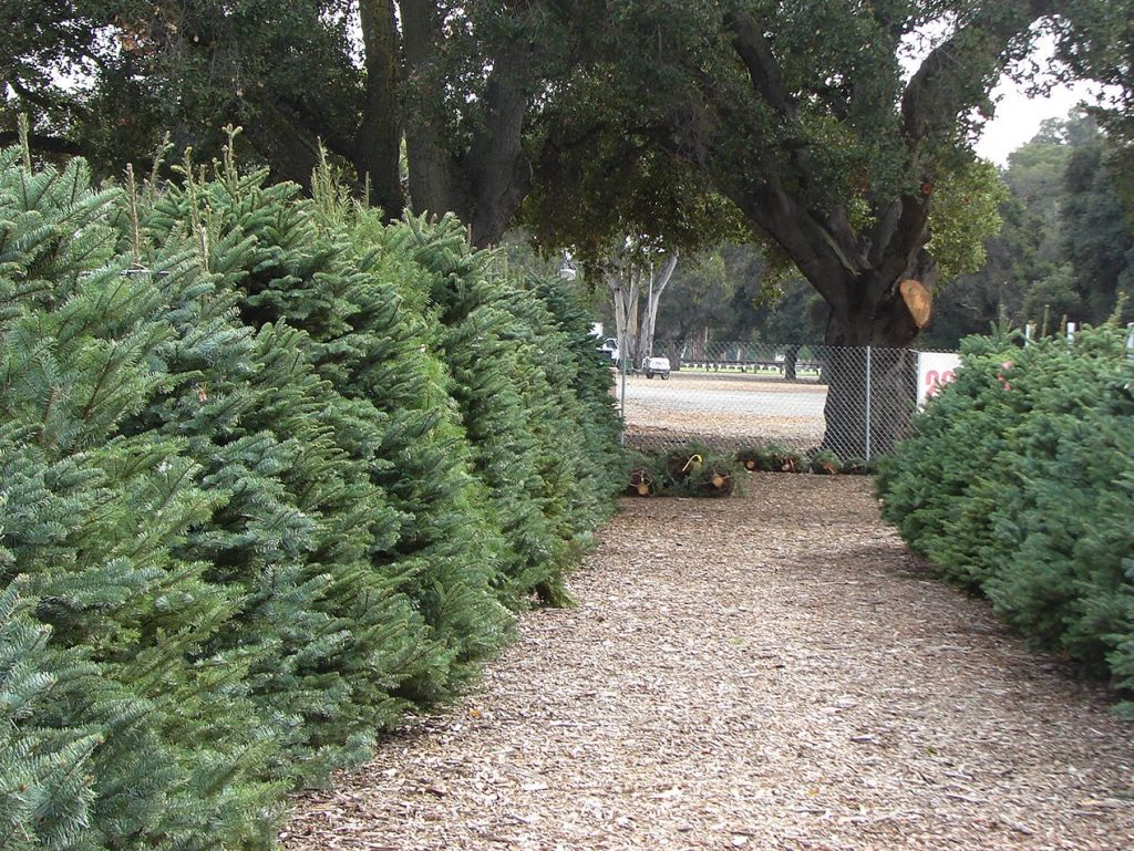 No Christmas tree lot for Menlo Park Kiwanis for the first time in 50 years