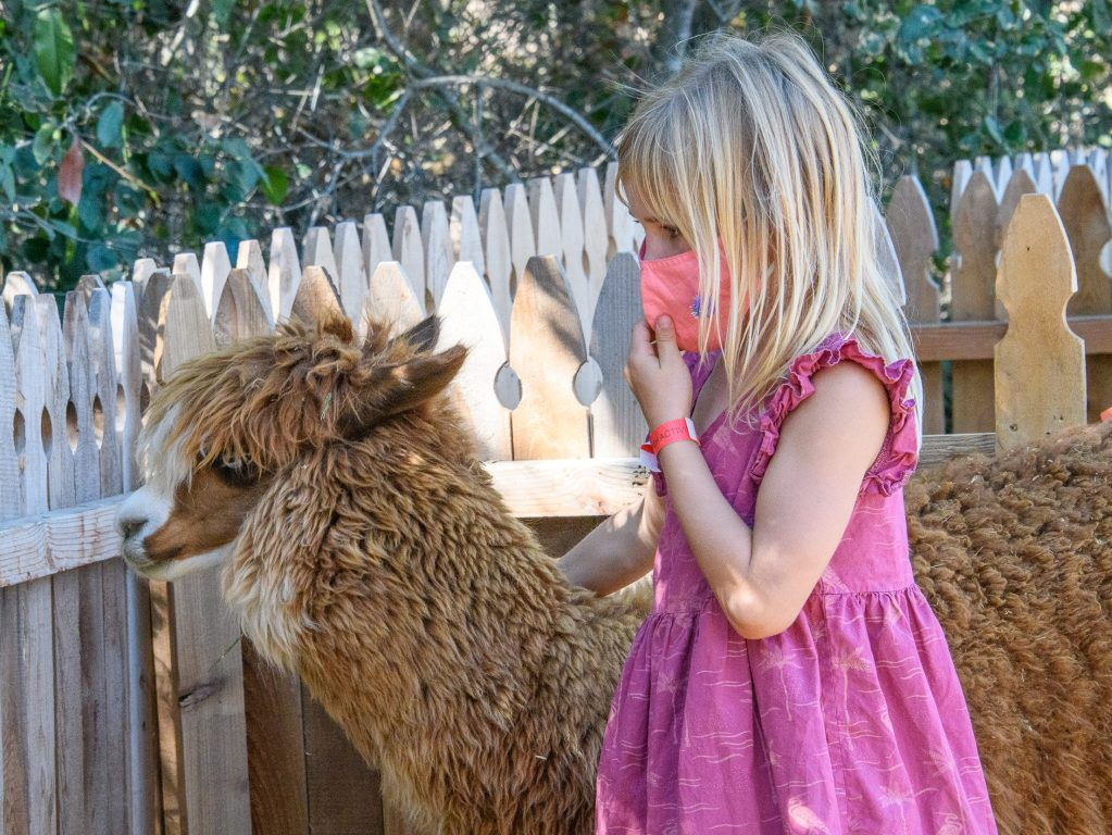 Animal encounters at Webb Ranch Pumpkin Patch on weekends