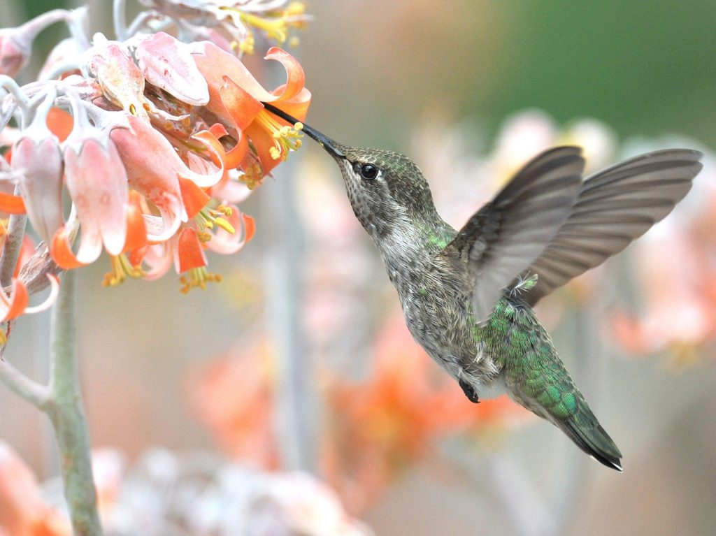 Birds are the focus of Rick Morris's wildlife photography