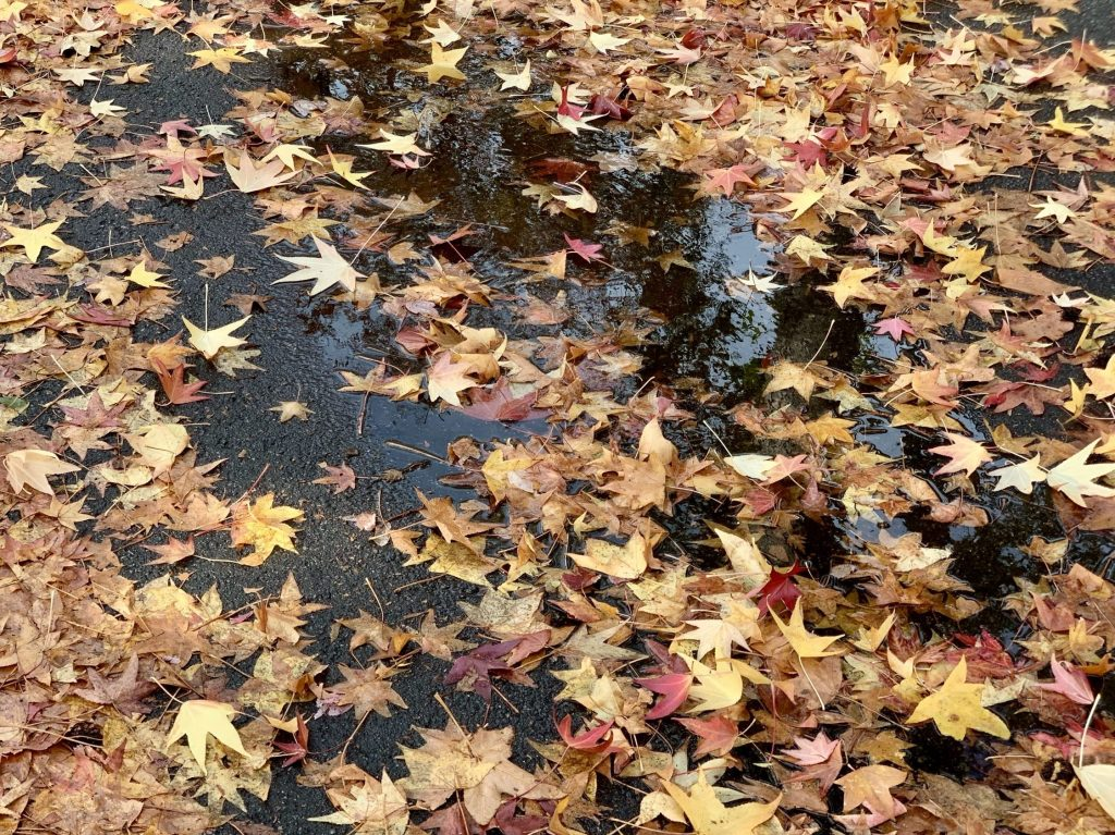Pick up fallen leaves before they block storm drains