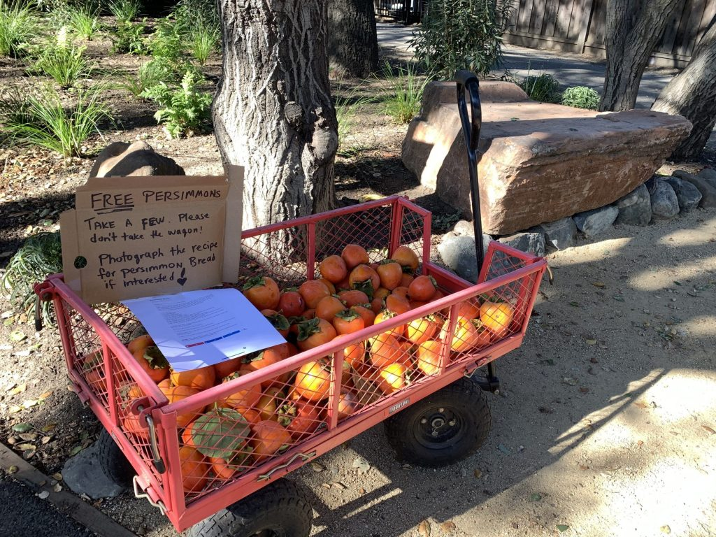 Spotted: Free persimmons complete with recipe