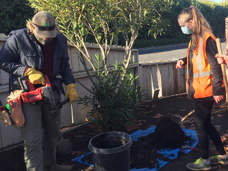Forty new trees planted in Menlo Park's Belle Haven neighborhood