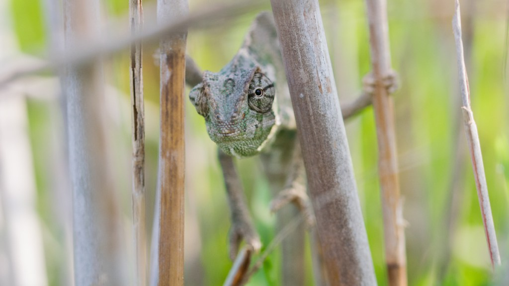 STEAM class for grades 1-8 focuses on reptiles on February 18