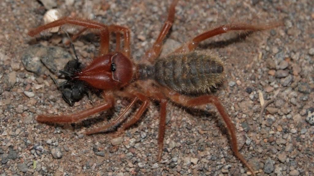 STEAM Class – Bugdork University: Incredible Arthropods set for March 25