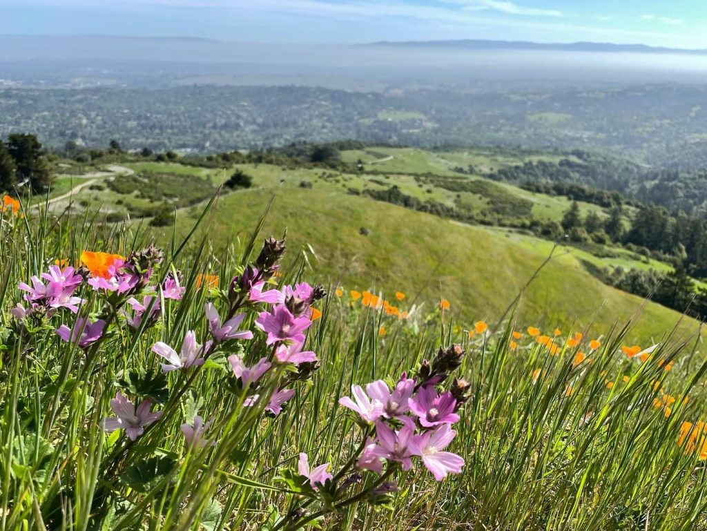 SMC Open Spaces & Natural Places offers Earth Day program on April 22