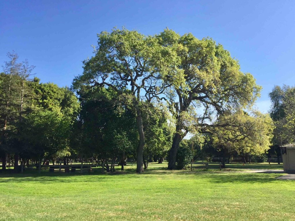 Residents create petition to save trees at Flood Park with gathering planned for April 25