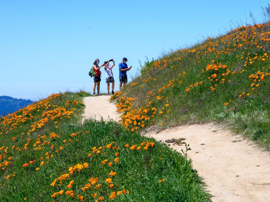 Wildflowers put on a show at Russian Ridge Preserve