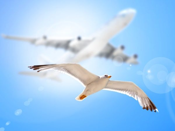 Elementary school kids are invited to a hands-on experience exploring avian and human flight on June 17