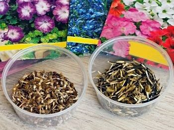 Starting flowers from seeds is garden talk topic on July 7