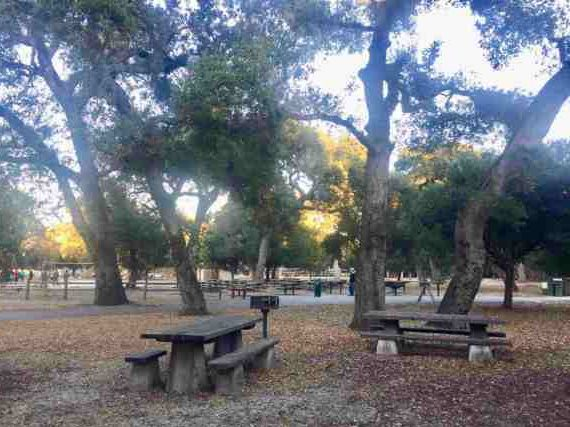 Effort to save Flood Park oak trees continues