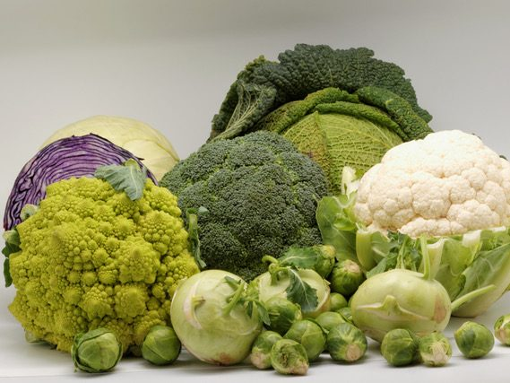 Fall crops: Brassicas and Friends is topic on August 4