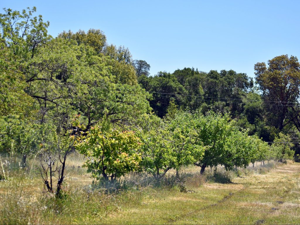 Orchard Days at Filoli on weekends beginning September 25