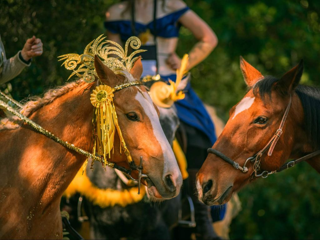 Day of the Horse in Woodside takes place today through Sunday