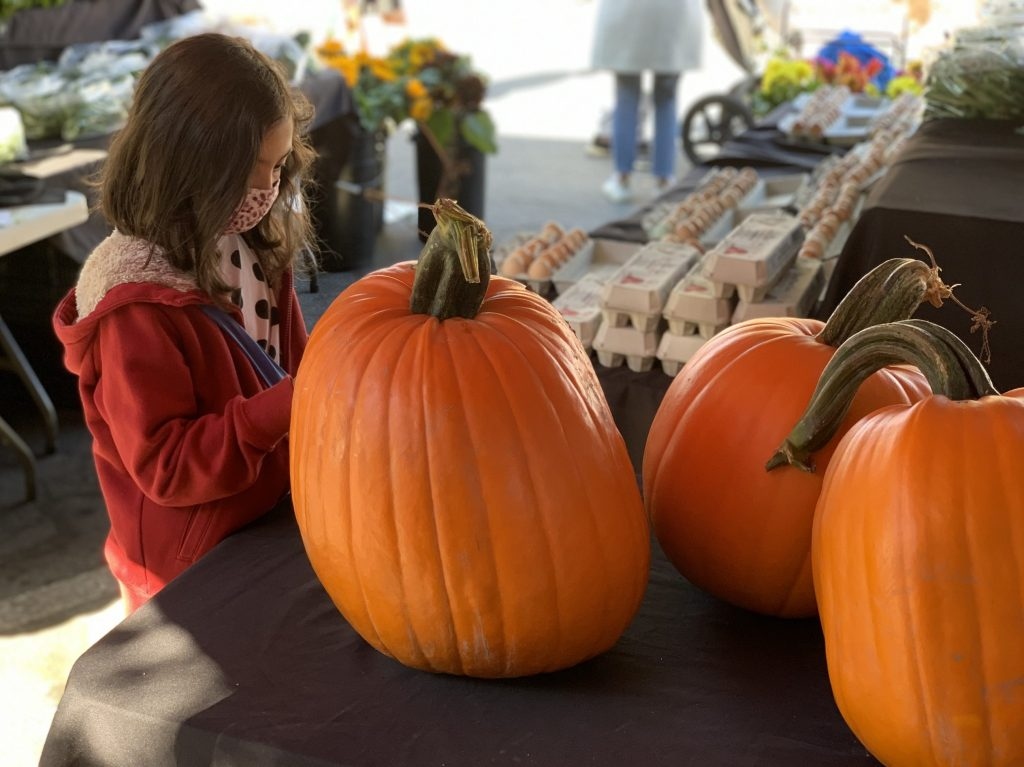 Spotted: Good looking Cozzolino pumpkins at Menlo Park Farmers Market